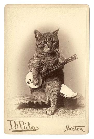 black and white photo of cat holding a banjo.